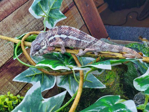 Florida reptile store